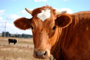 Cattle Feed Booking