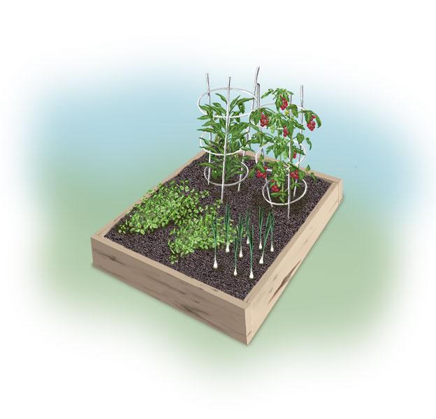chile-relleno-garden-illo