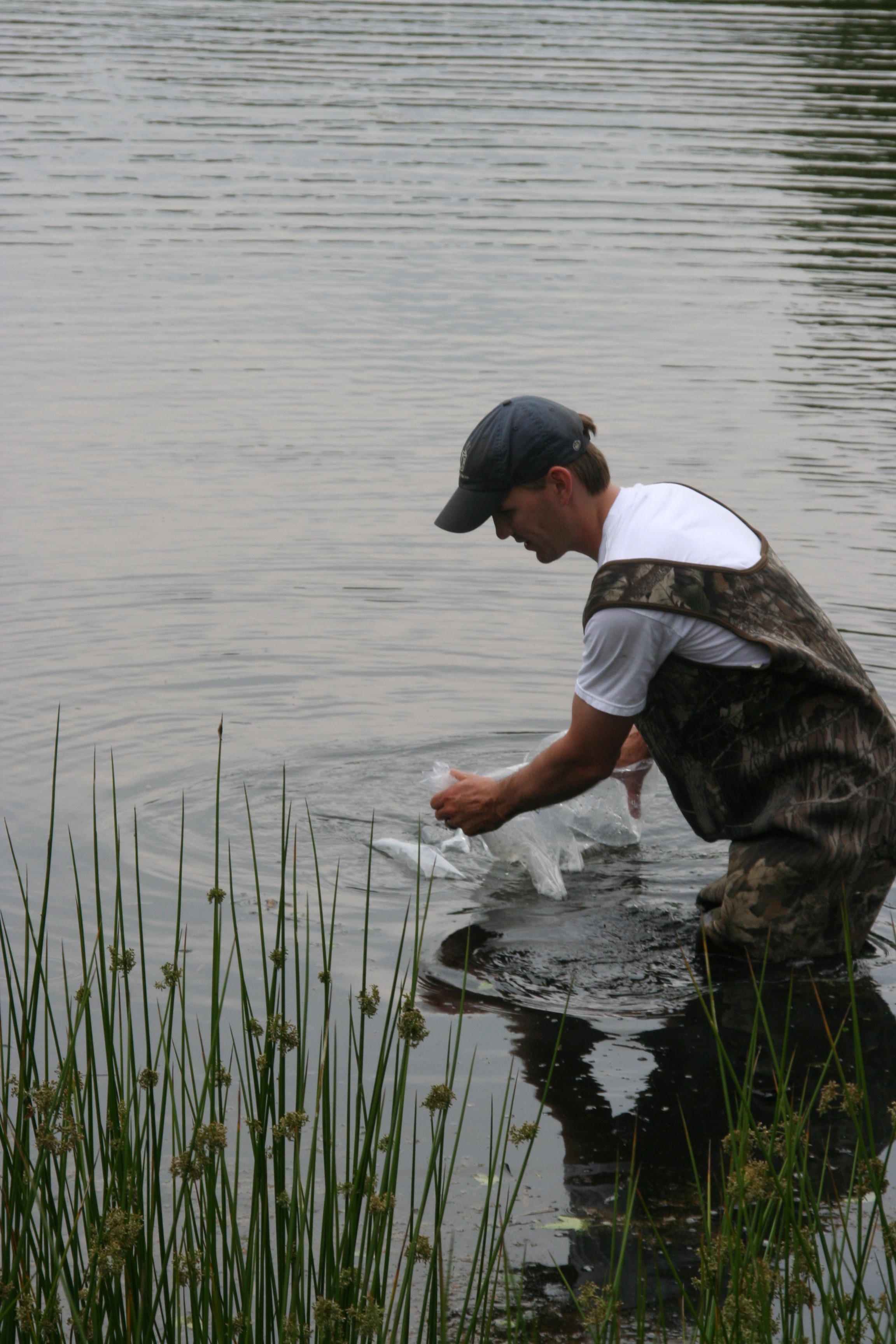 Pond stocking j n feed and seed for Fish stocking texas