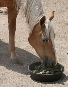Preparing your Horse for Spring