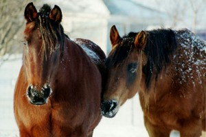 winterize horse
