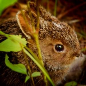 RabbitInGarden