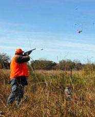 quail09
